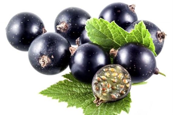 benefícios do suco de groselha negra-1